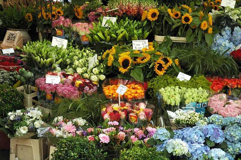 Vanzatoare florarie Constanta